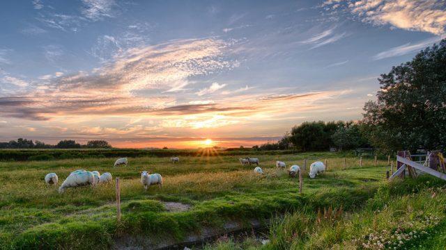Weiland met schapen en ondergaande zon