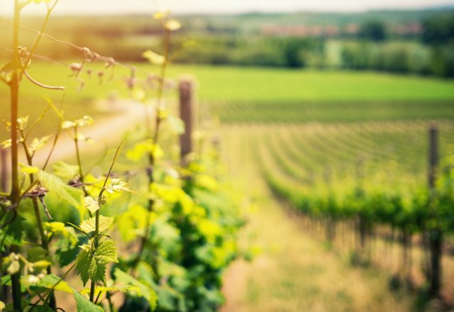 biologische biodynamische natuurwijn