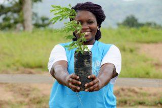Land Life Company herbebossing