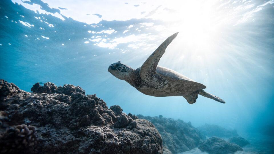 Oceaan herstellen